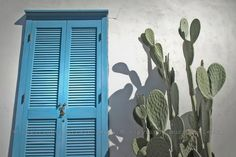 prickly pear with a cute blue door