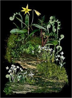 Shady Path, Woodland Photographs- Scanner as a Camera - Ellen. - Scanner Photography By Ellen Hoverkamp Floral Photography, Still Life Photography, Plant Illustration, Botanical Illustration, Trout Lily, Dame Nature, Decoration Plante, Nature Collection, Gardening