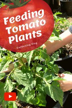 Indoor Gardening Supplies, Organic Gardening Tips, Container Gardening, Home Vegetable Garden, Tomato Garden, Grow Organic, Organic Herbs, Planting Vegetables, Growing Vegetables