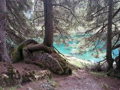 Obernberger See, Tirol Spaces, Plants, Natural Colors, Scarves, Felting, Lawn And Garden, Plant, Planets