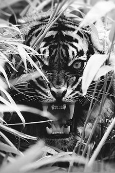 50 beautiful wild animals CutesyPooh – 50 … - Top Of The World Nature Animals, Animals And Pets, Animals Planet, Beautiful Cats, Animals Beautiful, Big Cats, Cats And Kittens, Motifs Animal, Tiger Tattoo