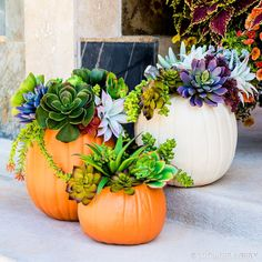 Carvable faux pumpkins are perfect for DIYing trendy fall decor!