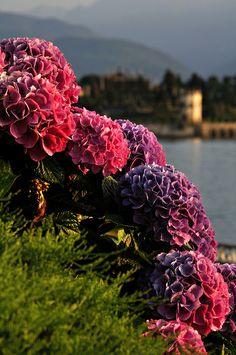 Lake Maggiore - Stresa, Piedmont, Italy