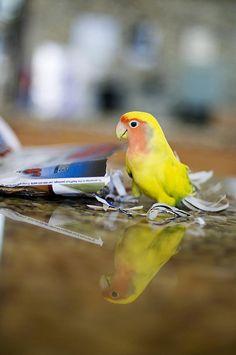 Lovebird, by cord1964