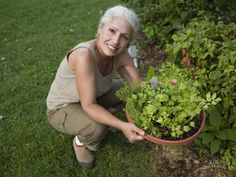 What Are Planting Times in Texas? Great schedule for planting vegetable gardens!