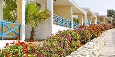 Donnez de la couleur à vos vacances #Sitia #Crete Outdoor Structures, World, Plants, Vacation, Travel, Color, The World, Plant, Planets