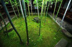 竹と苔の緑につつまれた癒しの竹の坪庭