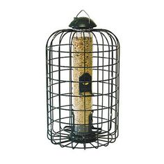 Find the Stokes Select Squirrel-Proof Bird Feeder by Stokes Select at Mills…