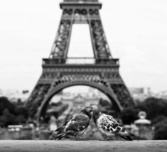 Even birds think Paris is the city of love.