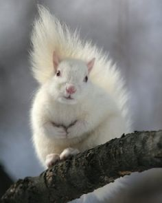 Albino squirrel in Trinity Bellwoods Park in Toronto, Canada Amazing Animals, Animals Beautiful, Rare Animals, Animals And Pets, Wild Animals, Cute Squirrel, Squirrels, Black Squirrel, Little Critter