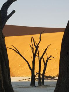 Dead Trees Silhouetted Against Sand Dune -- Namibia, Africa