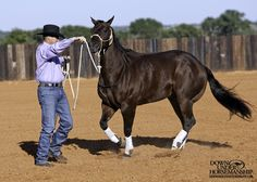 Groundwork Exercise #5: Changing Eyes Goal: To have the horse move around you in a circle, staying soft on the halter with an arc in his body. Then the horse should follow the feel of the lead rope to yield his hindquarters, bring his front end through and go off in the other direction. More about the exercise: https://www.downunderhorsemanship.com/Store/Product/MEDIA/D/253/