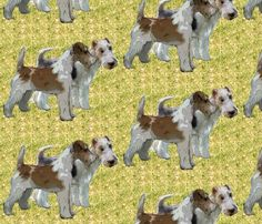 1736010_rwire_haired_fox_teriers_shop_preview