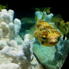 Busan Aquarium in Korea