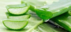3 Methods: Utilize the Aloe Vera Gel Extracting it from the Plant. Utilize Aloe Vera Gel as a Non-Rinse Conditioner Make a Face Mask . Home Remedies For Skin, Natural Home Remedies, Aloe Vera Piel, Natural Skin Tightening, Spray Moisturizer, Peeling, Health And Beauty Tips, Skin Treatments, Good Skin