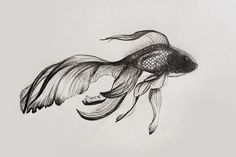 fish, cool, and indie image Chinese Drawings, Fish Drawings, Art Drawings, Tattoo Drawings, Animal Sketches, Animal Drawings, Drawing Sketches, Betta Tattoo, Phenix Tattoo