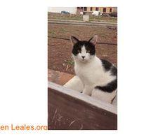 Frodo ℹ   #Adopta con #Faunario  Gato dócil. Ama a los humanos. Esterilizado en vías de vacunación. Cubro todo lo imprescindible para que lo adoptes.   En todos los navegadores: Leales.org y en todas las redes sociales: @lealesorg y #LealesOrg   #Adopción  Contacto y Info: Pulsar la foto o aquí: https://leales.org/en-acogida-o-adopcion/gatos-en-adopcion/frodo_i4153    Acerca de esta publicación:   Esta publicación NO ha sido creada por Leales.org y NO somos responsables de su contenido.  Ha…