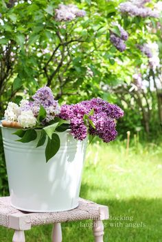 laughing with angels: lilacs