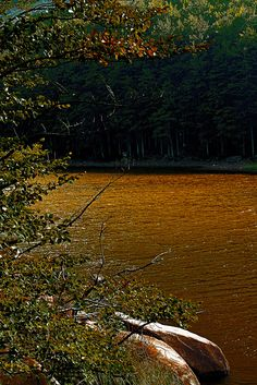 High Val Parma Forest  -  The Lagoni Gold in  lake