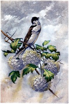 Beautiful Bird with Hydrangeas Image! - The Graphics Fairy