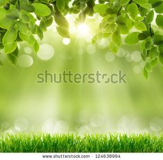 Natural Green Background With Selective Focus Stock Photo 124638994 : Shutterstock
