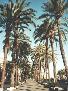 Palm tree lined streets. My future contains palm tree lined streets. California Dreamin', California Palm Trees, Paradise California, Palm Trees Beach, California Fashion, California Camping, Los Angeles California, California Wedding, Belle Photo