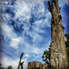 #deep #blue #sky #tree #beauty #log #indonesia