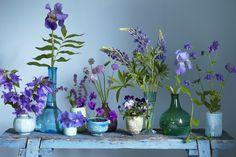 Blåa blommor, aklejor, lupiner, violer, näva, iris, salvia och gräslöksblommor.
