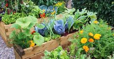 Check out these vegetable garden layout tips and tricks. Changing the design of your vegetable garden layout can do wonders in terms of vegetable garden health. Container Vegetables, Organic Vegetables, Growing Vegetables, Container Gardening, Flower Gardening, Vegetables Garden, Growing Plants, Veggies, Healthy Vegetables