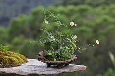 Kusamono bonsai Short Plants, Mini Plants, Little Plants, Small Plants, Indoor Plants, Ikebana, Moss Garden, Garden Art, Micro Garden