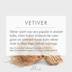 Vetiver Essential Oil Fun Facts