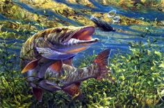 How To Get Started With Salt Water Fishing. Check out fishing. Pike Fishing, Sport Fishing, Bass Fishing, Fishing Tips, Sea Angling, Fish Art, Salt And Water, Freshwater Fish, Wildlife Art