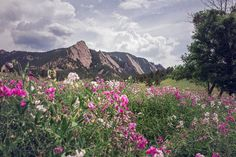 Chautauqua Park, Colorado by Kim Peterson