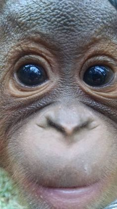 Omg save these beautiful adorable animals by crossing palm oil of your shopping list. You can make a difference!