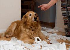¿Por qué elegir el refuerzo positivo para educar a tu perro?