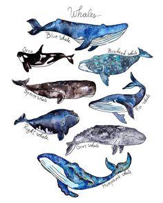 Set of 2 prints- Watercolor Whale Print + Shark Print Whale Poster Nursery Kids Whale Wall Decor Whale Art Beach Nautical Decor Shark Poster - I love WHALES! Watercolor Whale, Watercolor Paintings, Whale Art, Whale Sharks, Whale Decor, Winsor And Newton Watercolor, Wale, Art File, Art Plastique