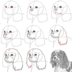 Learn how to draw a Cavalier King Charles Spaniel Dog with this how-to video and step-by-step drawing instructions. Art Drawings For Kids, Art Drawings Sketches, Cool Drawings, Skull Drawings, Animal Sketches, Animal Drawings, Dog Drawing Tutorial, Cavalier King Charles, Charles Spaniel