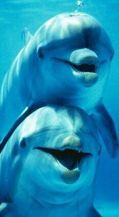 Dolphin hugs!
