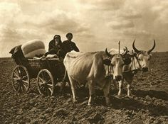 Images from Romanian village patriarchal former - Ox Cart (Dobrogea) Romania People, Old Photography, Vintage Farm, Black And White, Drawings, Pictures, Vintage Portrait, Cultural Diversity, Rock Formations