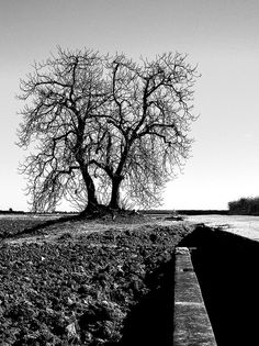 Black and white shot of an ancient tree...