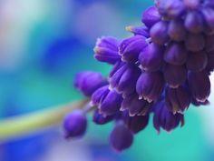 Цветы из сети.