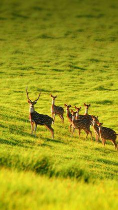 Elk animals 2 iPhone 7 Wallpapers