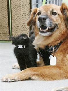Paw it forward: Dog who survived Hurricane Katrina calms shelter kittens