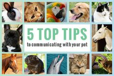 Animal communication with Faye Fletcher - a pet psychic who can help you with animal problems through animal telepathy and talk http://www.animalspeak.com.au #animalcommunication #petpsychic #animaltalk #animaltelepathy