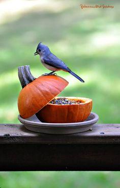 Rebecca's Bird Gardens Blog: A Change of Seasons