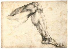 Study of a Left Leg (recto). Michelangelo. 1524-1525. Drawing. Black chalk.  207 x 247 mm. Teylers Museum. Haarlem.