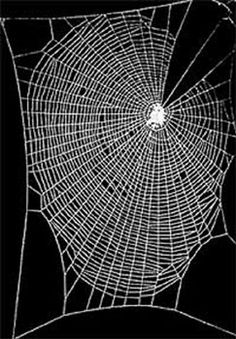 Image detail for -Nitrous Oxide Black Widow Spiders