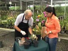 Produtor De Orquídeas - Como Fazer Muda Da Flor