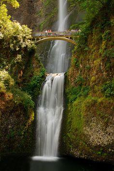Multnomah Falls, Columbia River Gorge (National Scenic Area), in Oregon Famous Waterfalls, Oregon Waterfalls, Beautiful Waterfalls, Beautiful Landscapes, Wonderful Places, Beautiful Places, Beautiful Forest, Simply Beautiful, Beautiful People