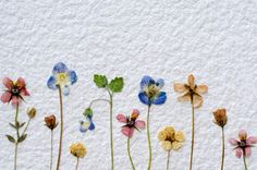 Make a dried flower wall quilt. Introduce a little summer into your home! If you love botanical prints, you will especially enjoy the beauty of this project. Heidi Ott of the Crafter's Community shares her instructions for making this lovely dried flower wall quilt. It is an easy craft to make -- nature did all the hard work for you -- and an elegant gift idea.